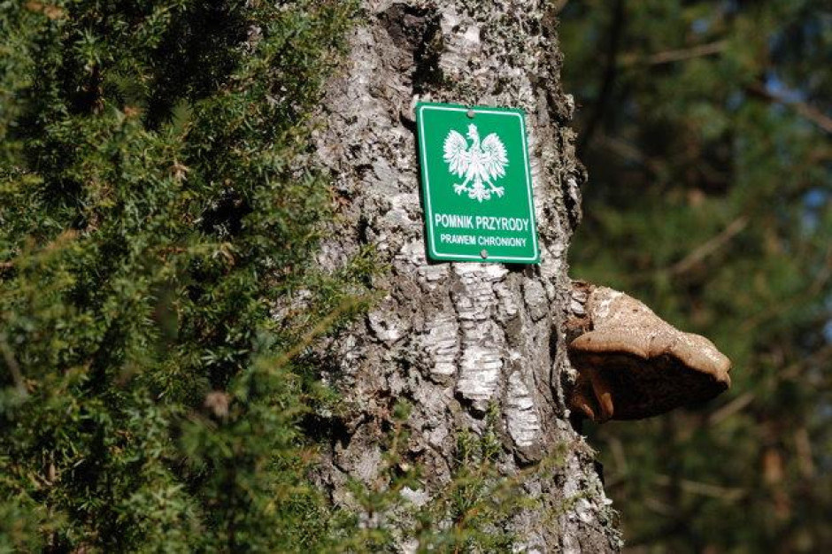 Pomniki przyrody, użytki ekologiczne. Gminynie chronią przyrody tak jak powinny