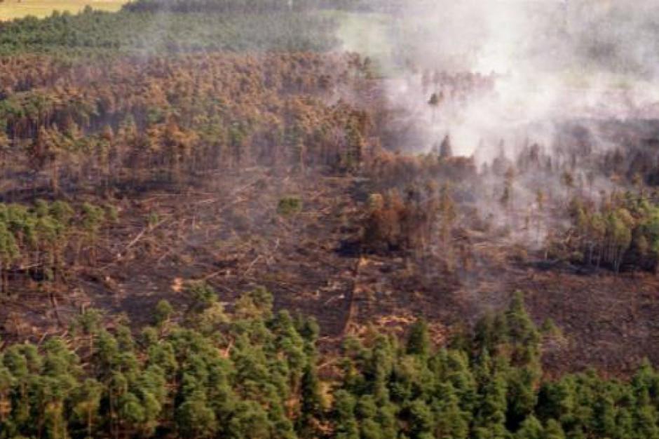 Straż pożarna uspokaja. Polsce nie grozi fala pożarów lasów