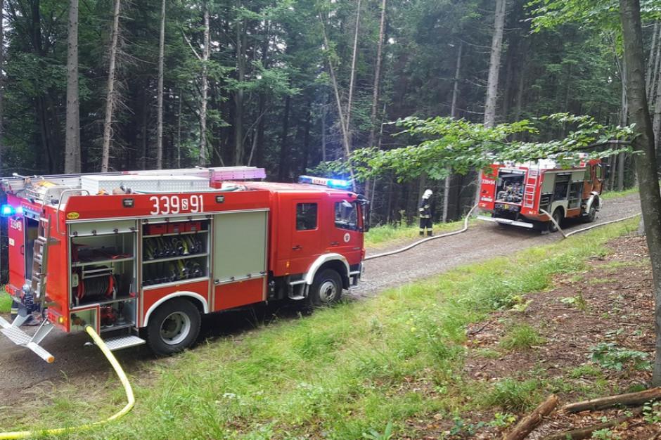Dwa razy więcej pożarów lasów niż w poprzednich latach. Alarmujące dane Lasów państwowych