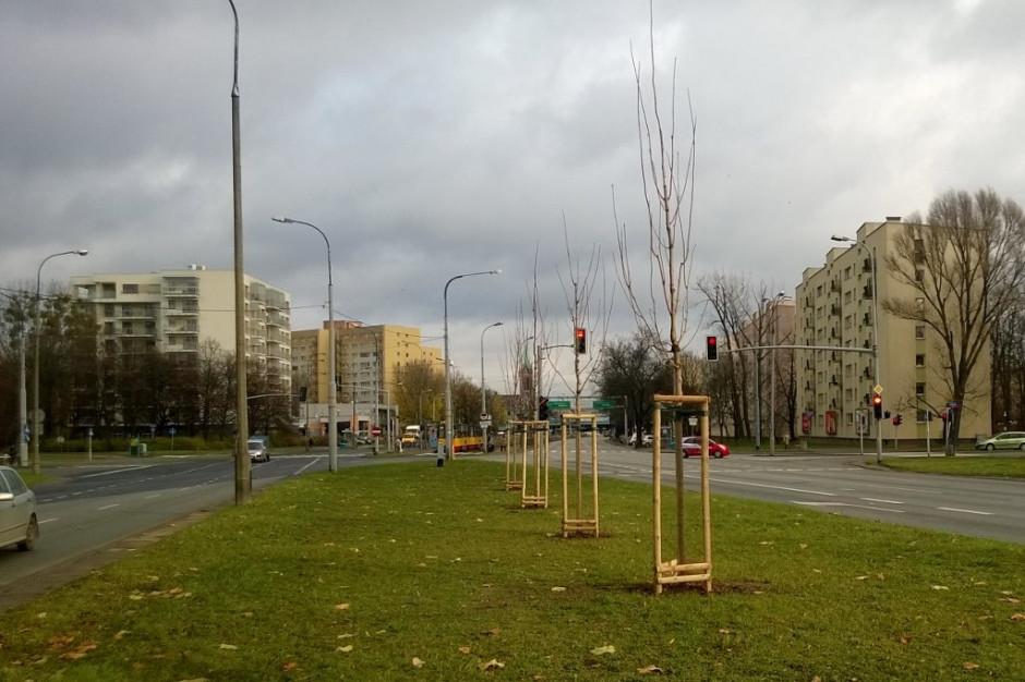 Stołeczni ogrodnicy chronią miejskie drzewa przed suszą