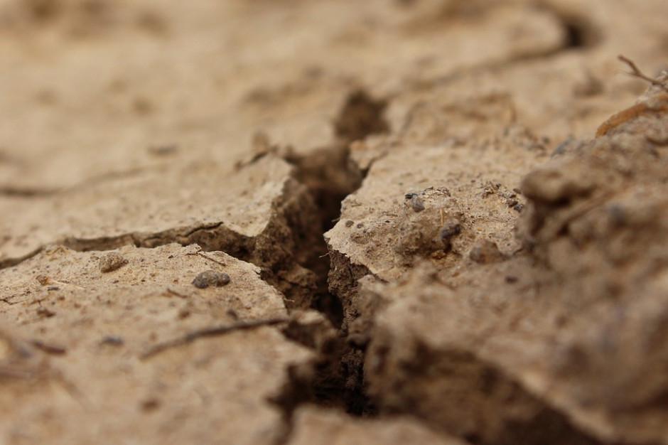 Ministerstwo rolnictwa: ponad 1,2 mld zł strat spowodowanych suszą
