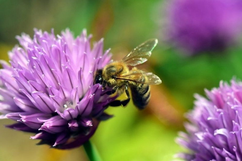 Podlasie: lekcje pszczelarstwa i szkolna pasieka