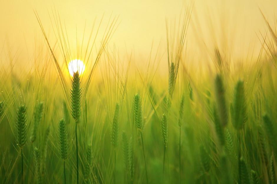 Ministerstwo rolnictwa zapowiada zmiany w obrocie ziemią rolną
