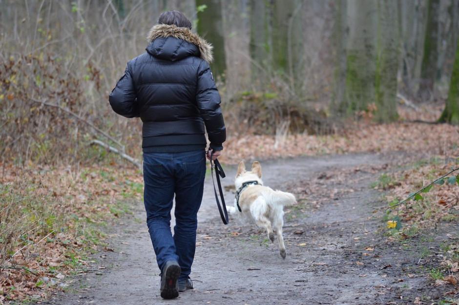 Zakaz wyprowadzania psów w parku prawomocny? NSA ostatecznie wyjaśnia