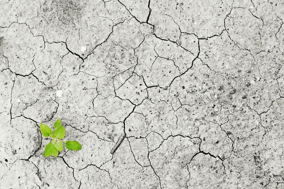 IUNG: pogłębiła się susza w zachodniej Polsce