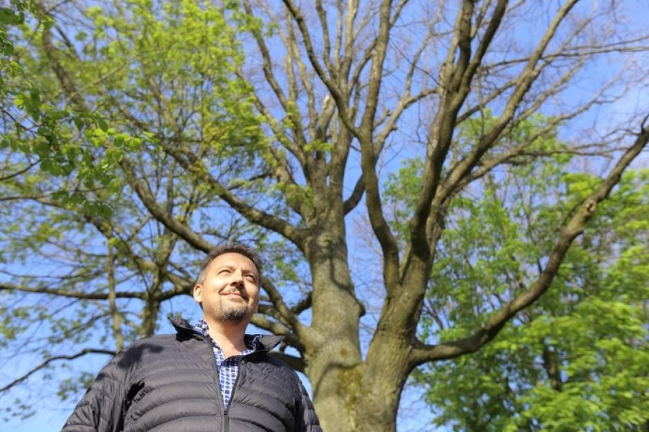 Trzy nowe pomniki przyrody w Gdańsku