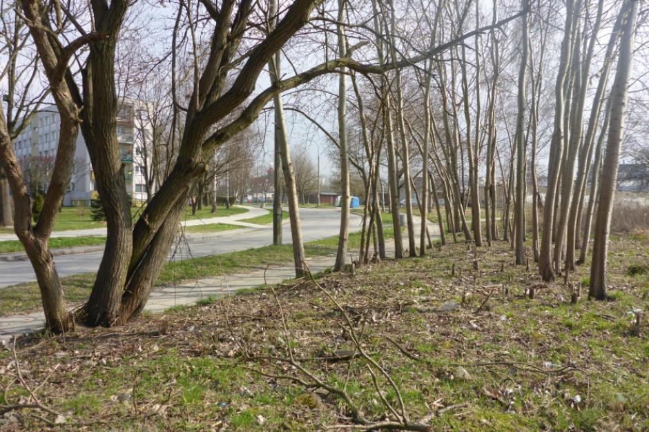 Kraków powiększy Park Aleksandry