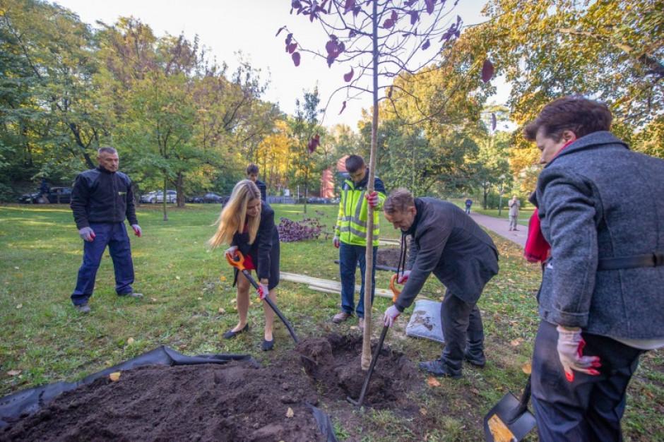 Warszawa walczy o czyste powietrze. W stolicy pojawi się 6 tys. nowych drzew