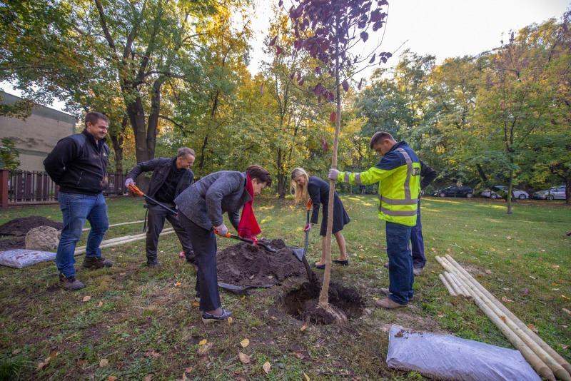 Pierwsze nasadzenie 6 tys. drzew. (Fot. R. Motyl/UM Warszawa)