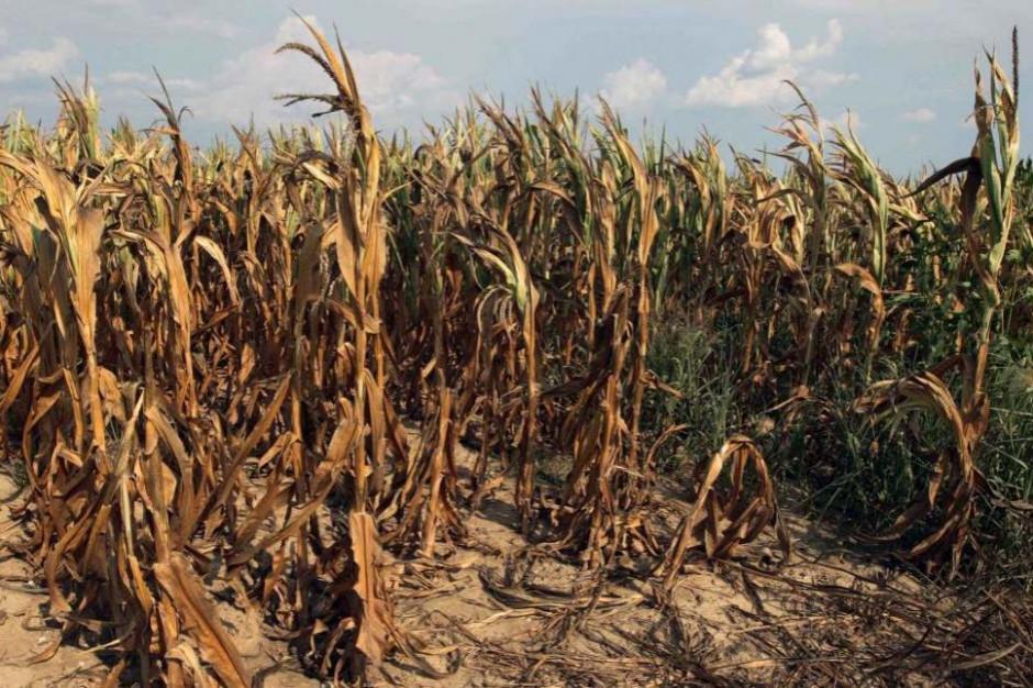 403 mln zł dla poszkodowanych przez suszę