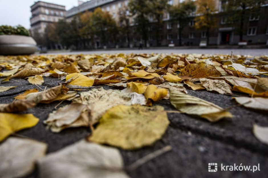 Kraków przypomina: Po co palić liście, skoro można je oddać