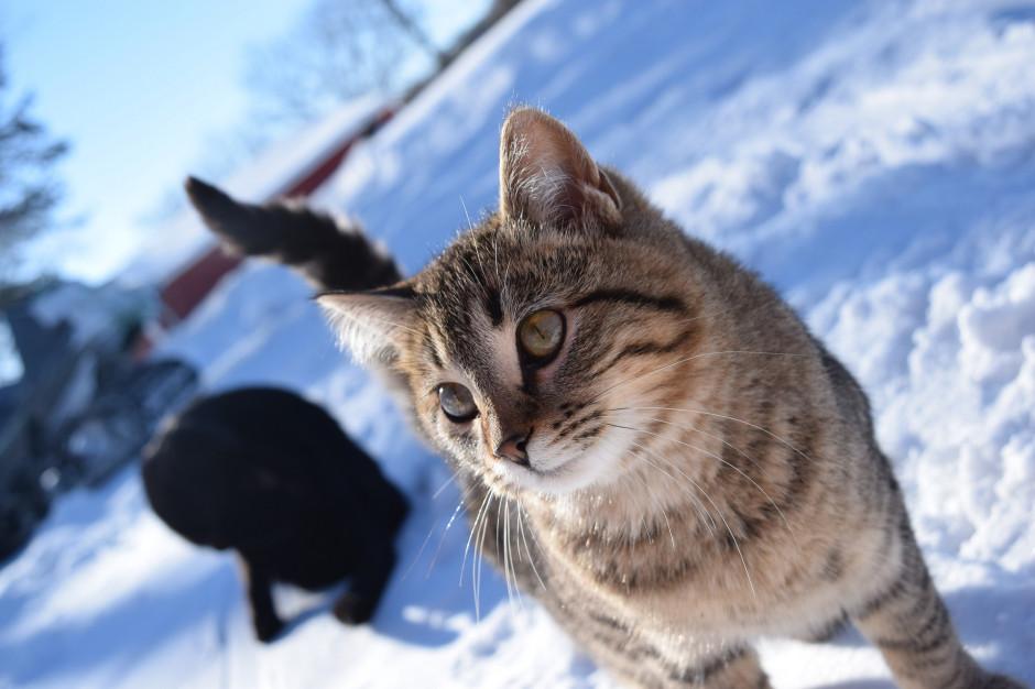 Białystok pomaga zwierzętom przetrwać zimę