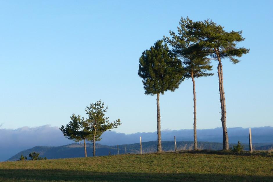 IMGW: silny wiatr i oblodzenie na wybrzeżu zachodnim i w górach