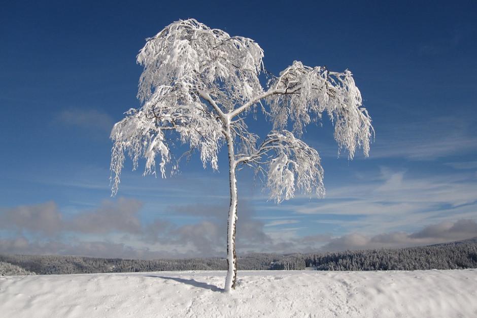 Bieszczady: W górnych partiach gór leży nawet 20 cm śniegu