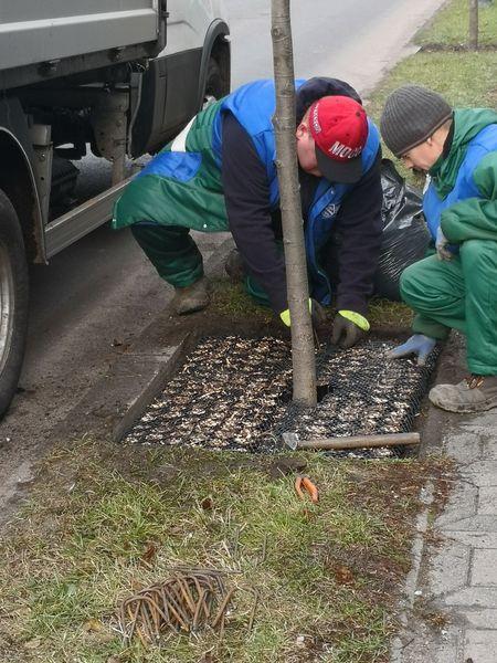 W pobliżu pnia drzewa wkopuje się wielorazową matę ochronną wypełnioną absorbentem, którym są zrębki uzyskane ze zmielenia wierzby energetycznej. Cechują się one dużą chłonnością. Są biodegradowalne oraz bezpieczne dla ludzi i zwierząt (fot.rybnik.eu/ZZM)