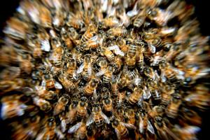 Niepełnosprawni robią domki dla pszczół