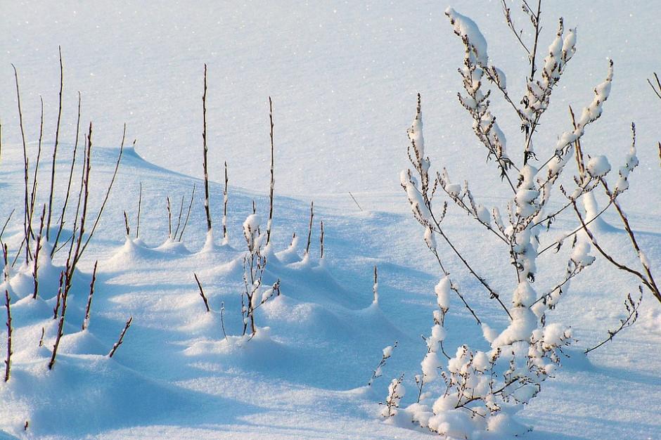 IMGW ostrzega: gołoledź i intensywne opady śniegu w sześciu województwach