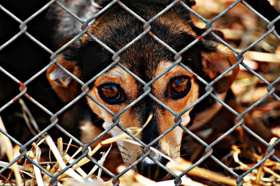 Schronisko dla zwierząt dostało 100 tys. dolarów w spadku