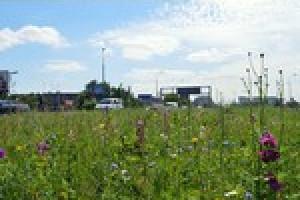W Białymstoku powstaną wiosną łąki kwietne