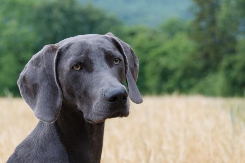 Interwencja RPO: Gmina nie może zakazać psom wstępu do parku