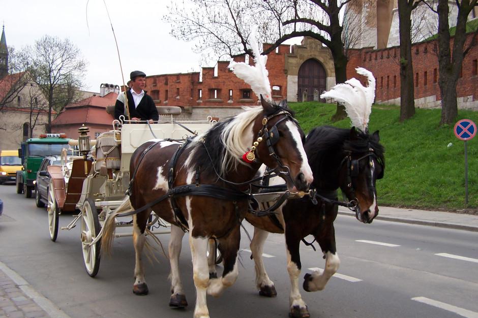 Kraków nie dba o konie? Aktywiści żądają zakazu wykorzystywania zwierząt w dorożkach