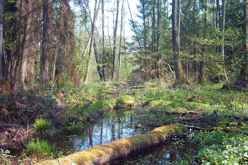 Cała Puszcza Białowieska parkiem narodowym?