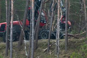 25 hektarów lasów do wycinki w związku z przekopem Mierzei Wiślanej