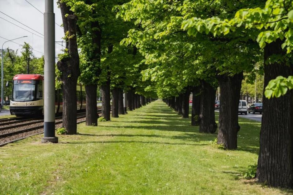 Gdańsk: Zabytkowa Wielka Aleja Lipowa odzyska dawny blask