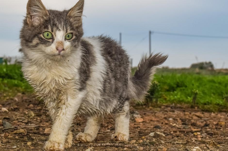 Kto policzy bezdomne koty? CV wysyłać do krakowskiego magistratu