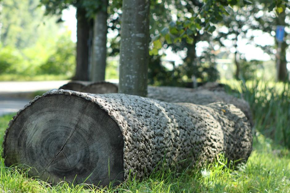 Poznań: Mieszkańcy zaniepokojeni wycinką drzew. Samorząd odpiera zarzuty