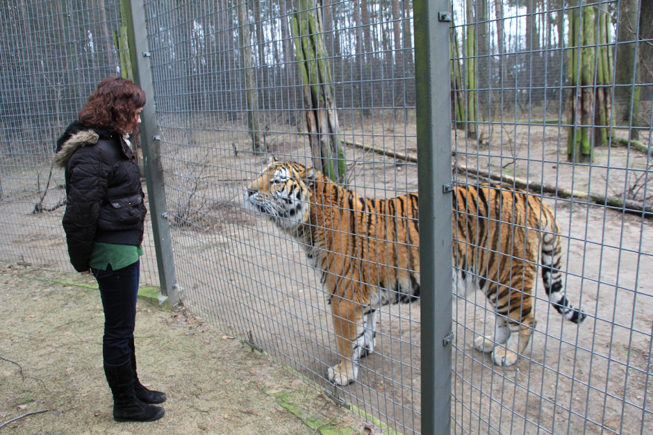 Poznań. Nowe Zoo wzbogaci się o nowy wybieg dla żyraf i nosorożców