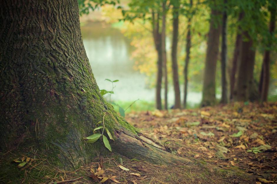 Dofinansowanie z ARiMR dla właścicieli lasów. Nabór wniosków od 2 maja