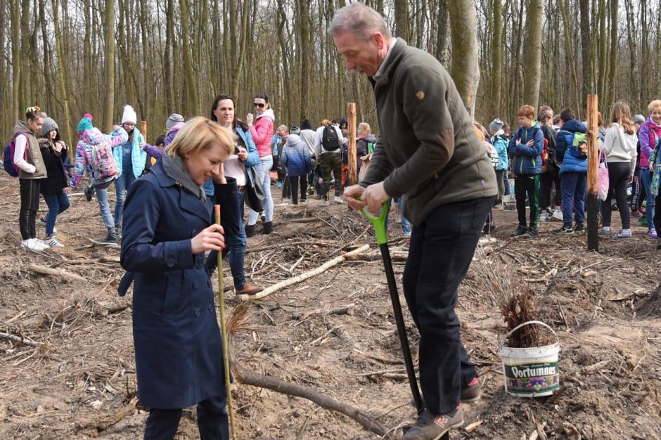 Wielkie sadzenie drzew w Poznaniu