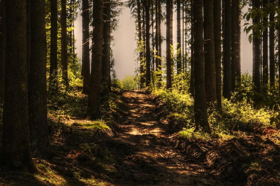 Podatek leśny nie dla starostów.  Ministerstwo finansów planuje zmiany?