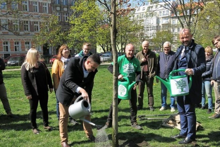 We Wrocławiu posadzono drzewo ku czci prezydenta Gdańska Pawła Adamowicza