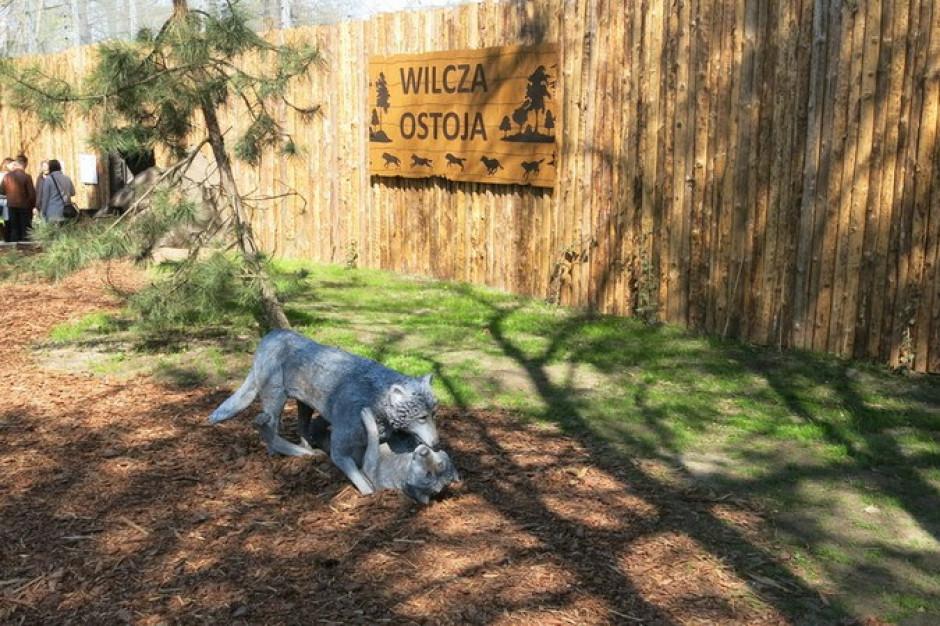 Nowy wybieg dla wilków we wrocławskim zoo