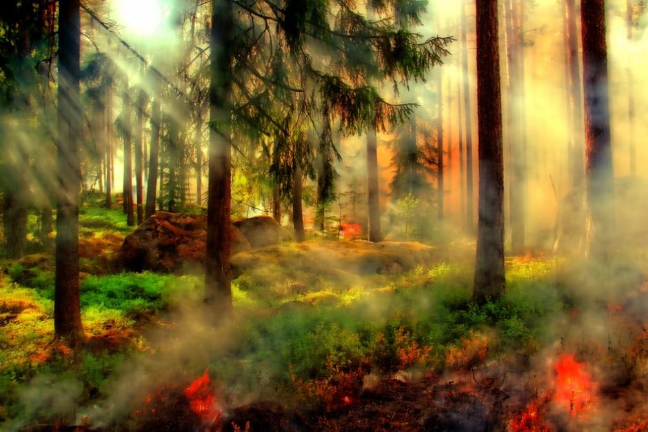 W całym kraju najwyższy stopień zagrożenia pożarami w lasach