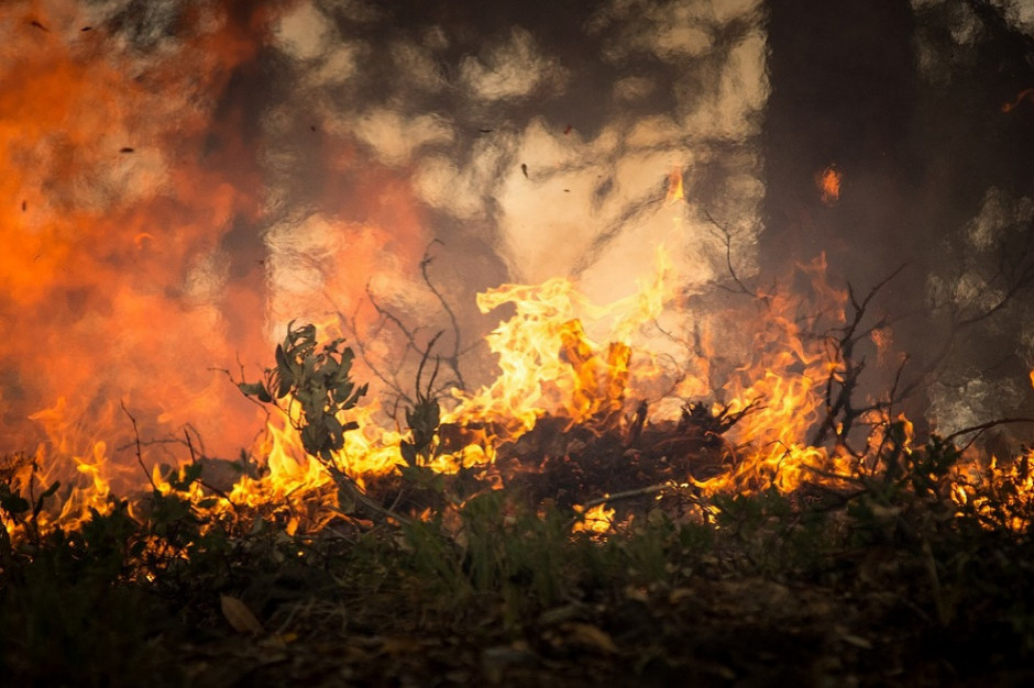 Strażacy ostrzegają: 30 pożarów w lasach, setki interwencji ze względu na silny wiatr