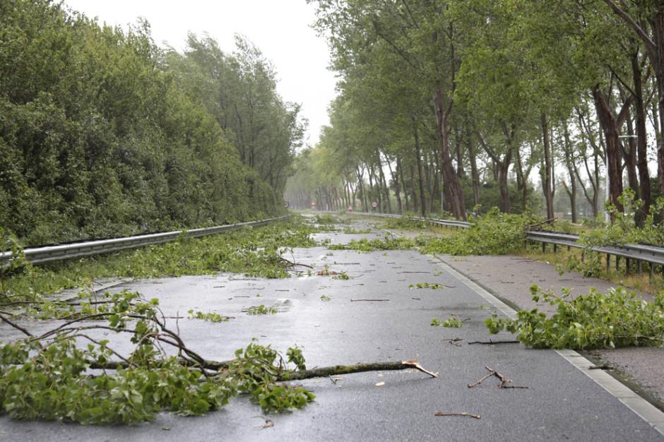 IMGW ostrzega przed silnym wiatrem na północy kraju
