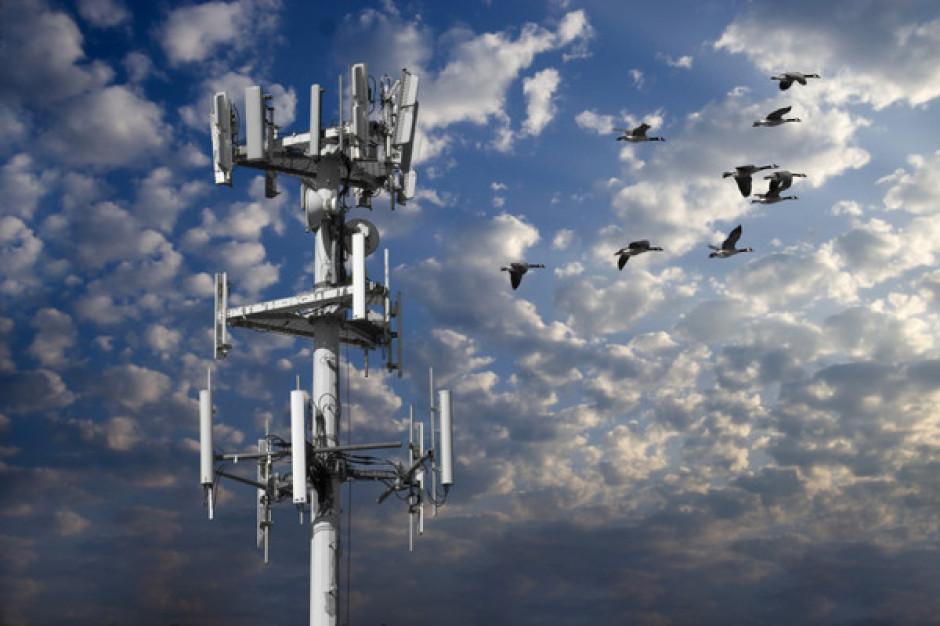 NIK alarmuje: promieniowanie od urządzeń telefonii komórkowej bez żadnego nadzoru