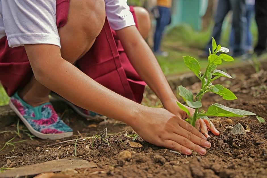 """Mieszkańcy posadzą drzewa swoim dzieciom. """"Jedno dziecko, jedno drzewo"""""""