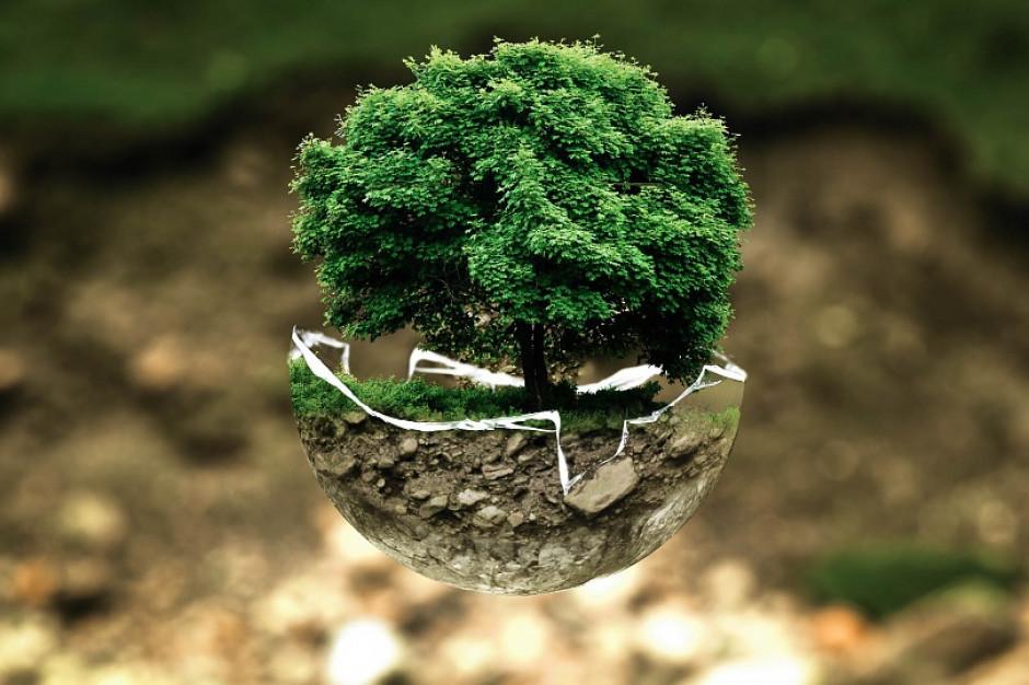 W Katowicach stanie Drzewo Klimatyczne