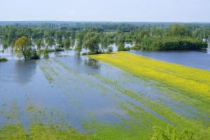 Świętokrzyskie walczy z wodą. Stan alarmowy w czterech powiatach