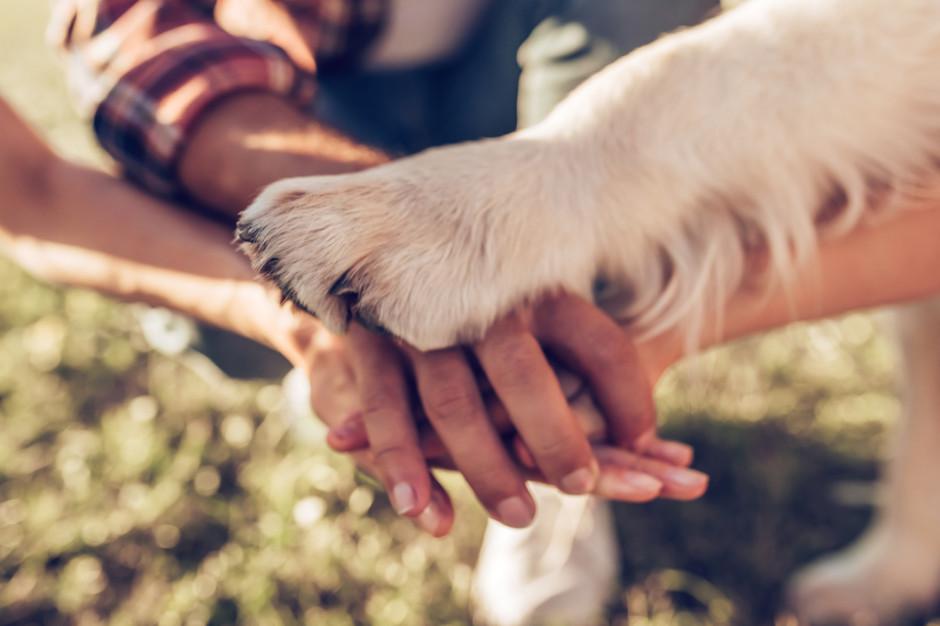 Białystok. Do adopcji psów ze schroniska zachęcano w kawiarniach