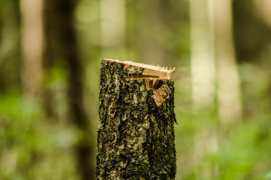 Pisz: Wyciął drzewa na działce sąsiada. Grozi mu kara
