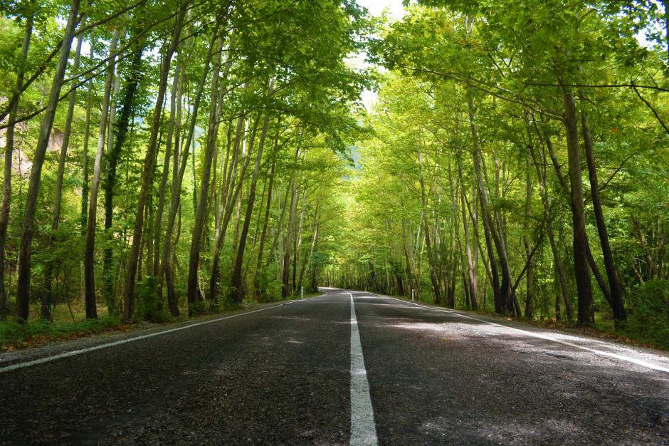 Drogi i zabudowa przerywają korytarze ekologiczne. Konieczna budowa przejść dla zwierząt