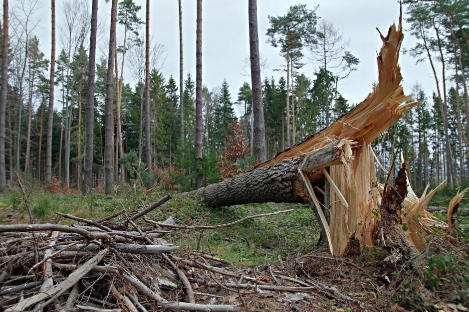 Zachodniopomorskie: Uszkodzone dachy i powalone drzewa po nawałnicach