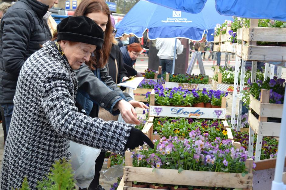 Kwiaty oczyszczą powietrze w mieście. Kraków rozdaje skrzydłokwiaty