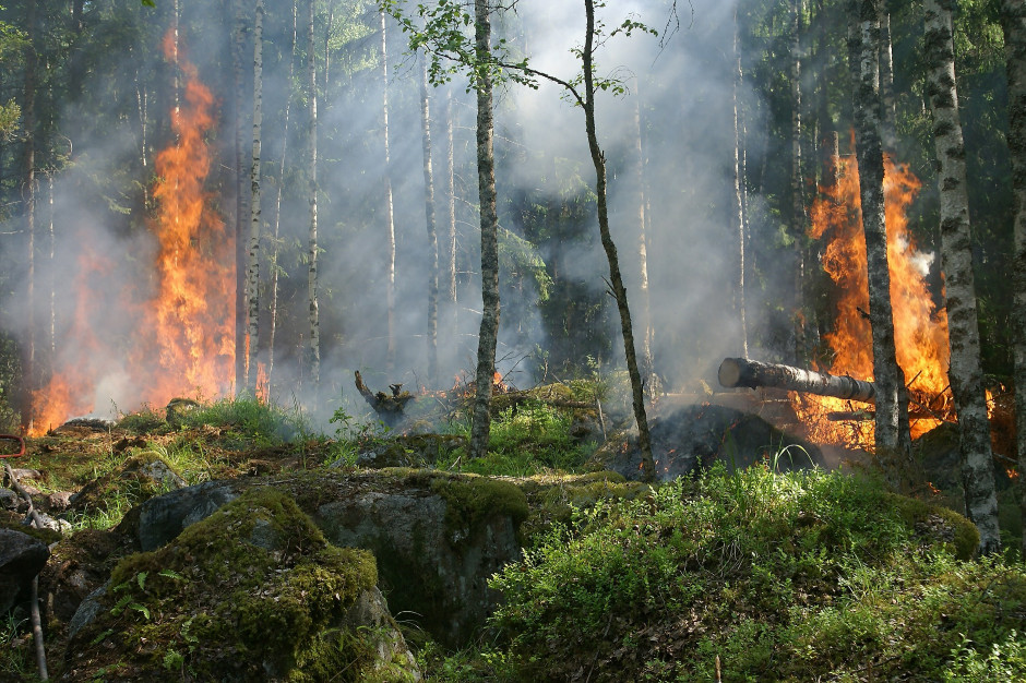 Zagrożenie pożarowe w lasach zachodniej Polski