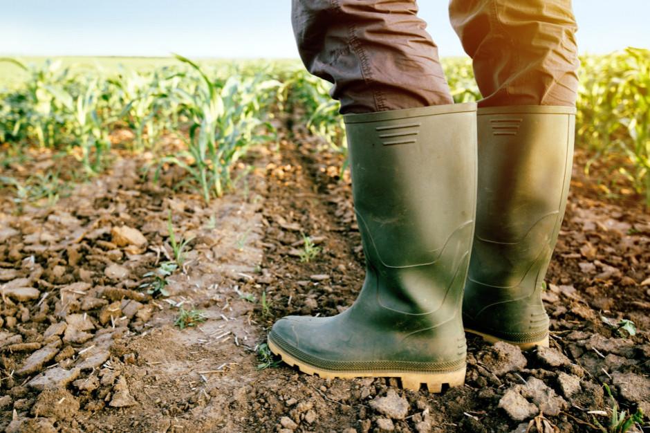 Aż 10 województw objętych suszą rolniczą